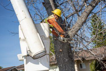 arborist tree service near me