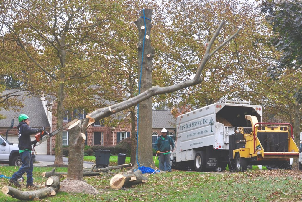 tree-removal-services-near-me