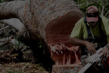 cheap-tree-service