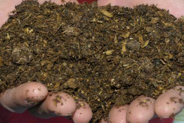 organic soil lowe's