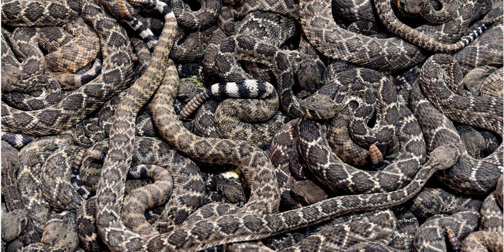 best snake chaps