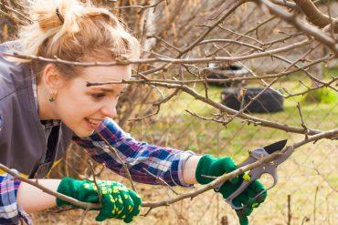 Woman-Pruning-Tree