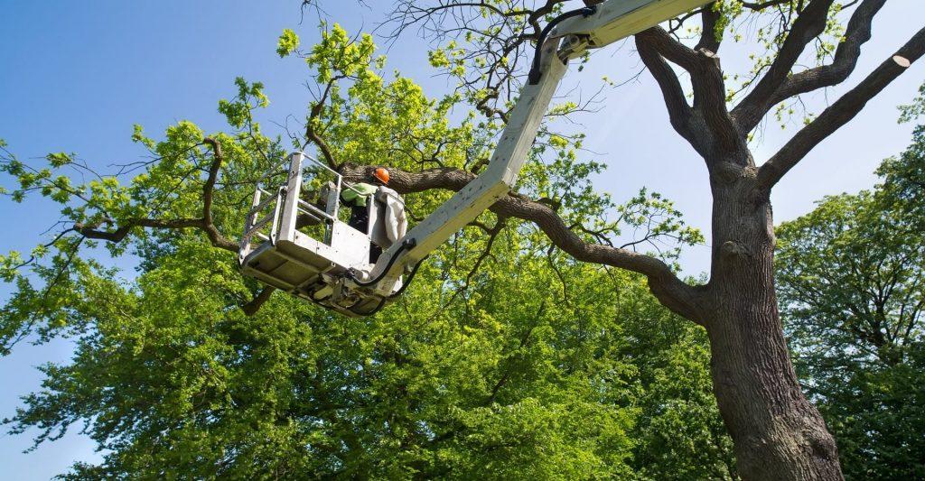 tree service jobs