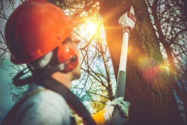 tree service near my