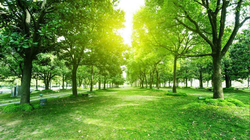 davey tree service near